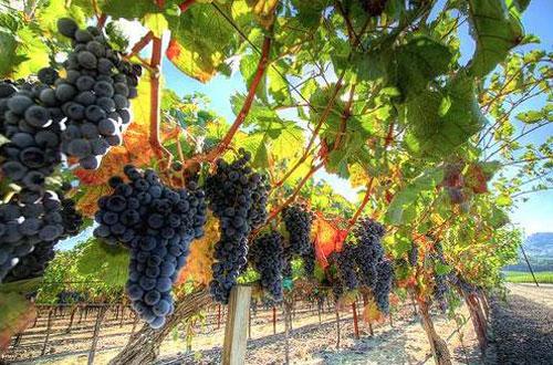 О роскошной вилле и виногрдниках Путина сообщают британские СМИ