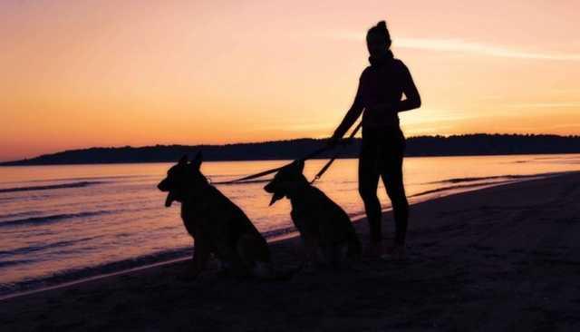 Крымской чиновнице пришлось извиниться за пожелание сдохнуть собачкам отдыхающих жителей