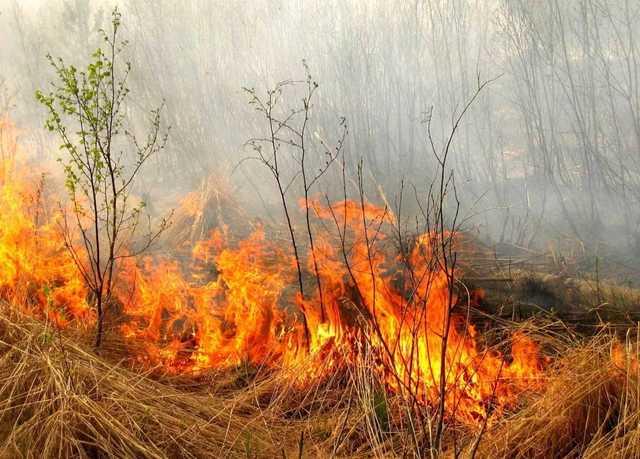 В Украине объявили о чрезвычайной пожарной опасности